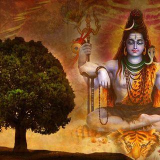 Rudraksha - Lord Shiva's Teardrop