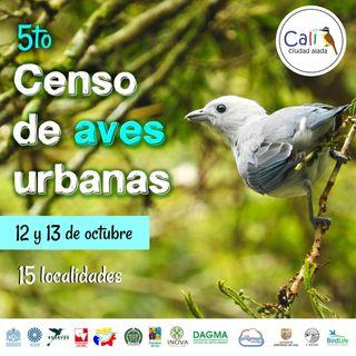 NUESTRO OXÍGENO Quinto Censo de aves urbanas - Patricia Falk
