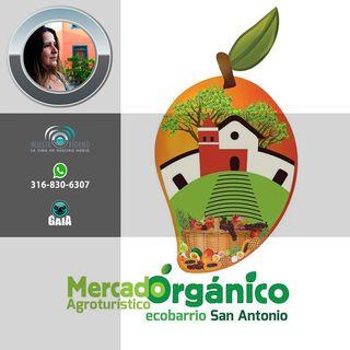 NUESTRO OXIGENO Mercado orgánico San Antonio - Angela Medina