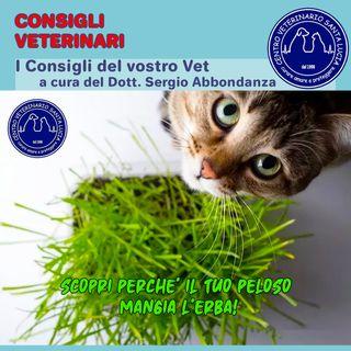 Scopri perchè il tuo cane o gatto mangia l'erba!