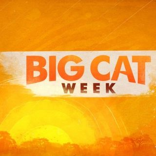 Boone Smith Big Cat Week NATL Geographic