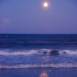 sahil kenarında