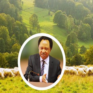 NIGERIA :  North Should Set Up Grazing Reserves To End Farmer-Herder Crisis - Shehu Sani