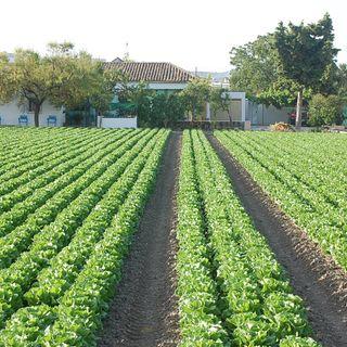 Como ocurre con el hortelano, lo nuestro es sembrar y regar, el fruto vendrá a su tiempo (27.1.17)