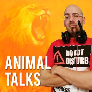 Animal Talks 8 - Il Pangolino