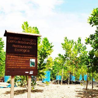 NUESTRO OXÍGENO Incendios forestales Prevención y restauración ecológica - Paula Arellano