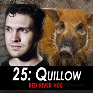25 - Quillow the Red River Hog