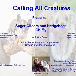 Sugar Gliders and Hedgehogs, Oh My