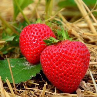 Meditar es como un campo de fresas (Ooooh)