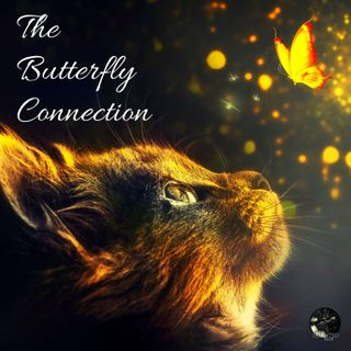 EP - 34 The Butterfly Connection | Paranormal, Supernatural, Spirit Guide