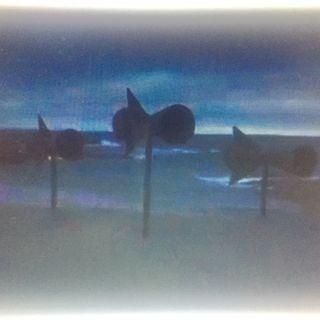 memory/balene nel vento