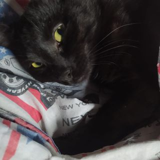 #sangio-cspt Aiuto un gatto nero!