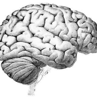Marco Marino: le onde cerebrali