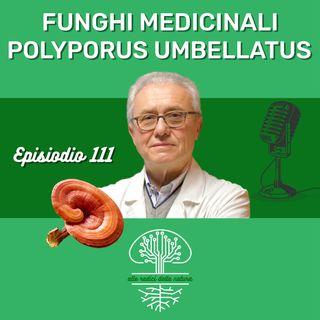 Funghi Medicinali: POLYPORUS UMBELLATUS