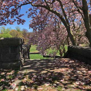 Verses to Spring Ahead; Poetry Reading by Joseph S. Fusaro