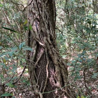 Forestpod im Butrint Nationalpark Albania