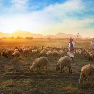 Il Pastore e le pecore - Quarta di Pasqua (Romano) - 12 Maggio 2019