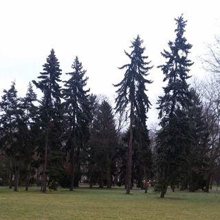 KrakYouth Radio - Placez - Auschwitz