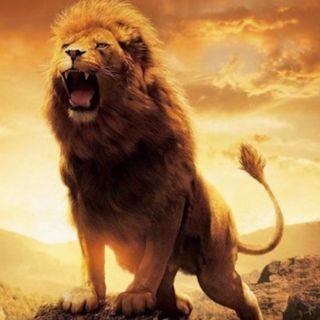 Salvato dai leoni