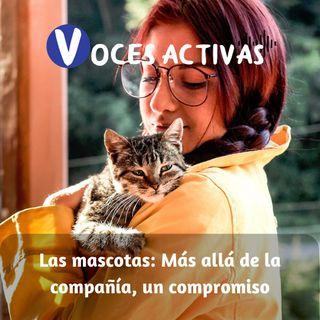Las mascotas: Más allá de la compañía, un compromiso