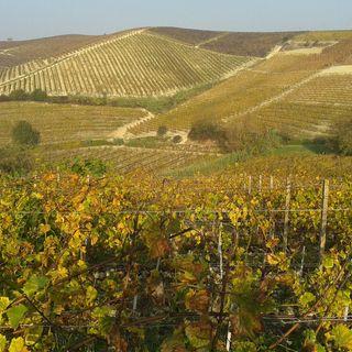 Tutto Qui - Giovedì 20 Giugno - Langhe, Roero e Monferrato, cinque anni di Unesco