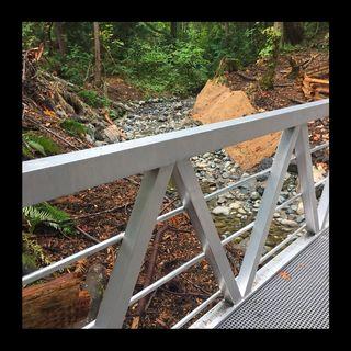 The New Bridge 5K.