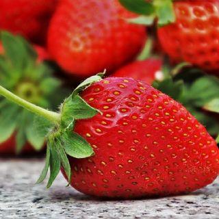 La Dieta Paradossale. Seconda Parte