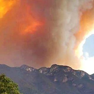Incendios dañan más de cinco mil hectáreas en NL