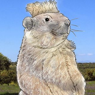 Elshow Marmota6