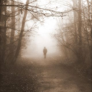 Forest, poesia inedita di nanita