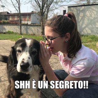 #cr Ciao cane come stai?