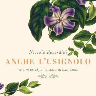 """Niccolò Reverdini """"Anche l'usignolo"""""""