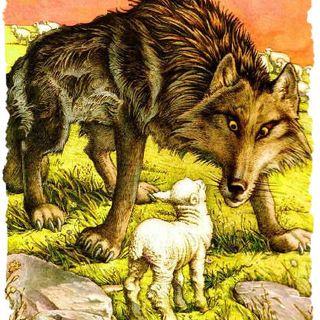 5 Il lupo e l'agnello