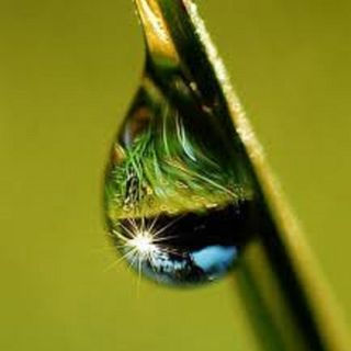 A Dew of Life