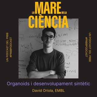 EP03: Organoids i desenvolupament sintètic amb el David Oriola