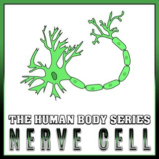 Nerve Cells (The Human Body Series)