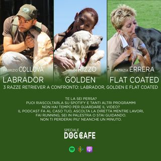 #026 - 3 razze retriever a confronto labrador golden flat