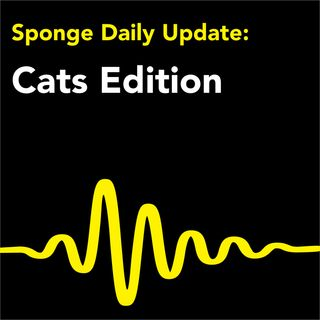 Daily News about Cats - Seriously