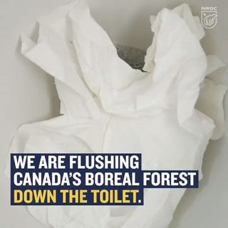 Flushing Our Forests Aways