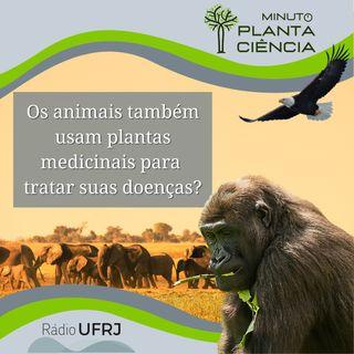 Minuto PlantaCiência - Ep. 02 - Os animais também usam plantas medicinais para tratar suas doenças? (Rádio UFRJ)