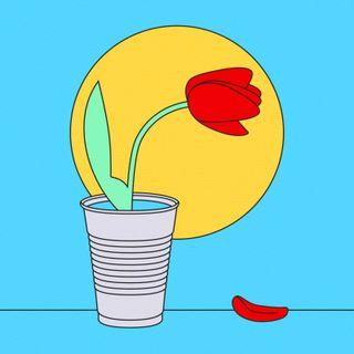 """9- """"Tulip"""" NOTOPOP"""
