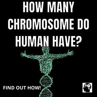 How Many Chromosome Do Humans Have?