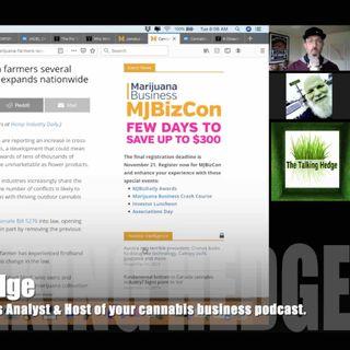 Hemp Cross-Pollination Decimating Cannabis Crops? (2019)