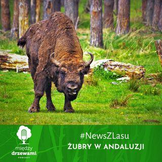News z lasu - Żubry w Andaluzji