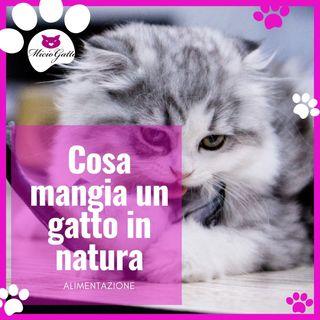 Alimentazione del gatto in natura, come si nutre in realtà un gatto? - con Valerio Guiggi