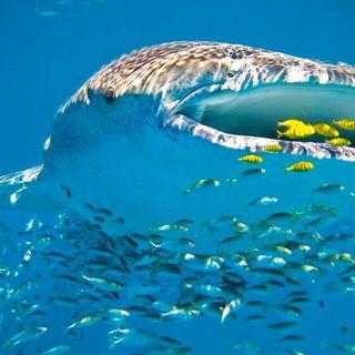 Gibuti: squali balena e laghi di sale