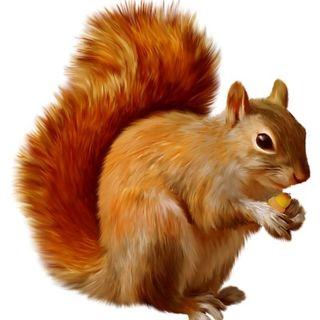 Substitute Squirrel