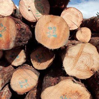 Tariff On Canadian Lumber Announced