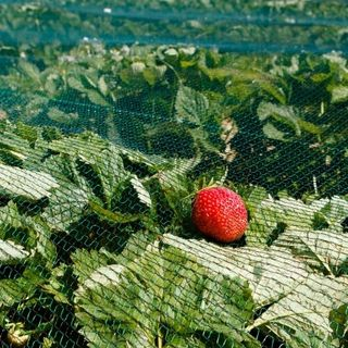 Agricoltura amica della terra: il decalogo