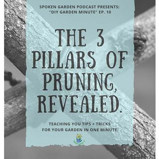 DIY Garden Minute Ep10 - The 3-Pillars of Pruning